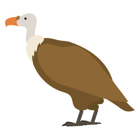 flat bird isolated on white background, beautiful illustration gyps fulfus Illustration