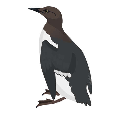 common murre bird detalised on white background, bird in modern cartoon style Ilustrace