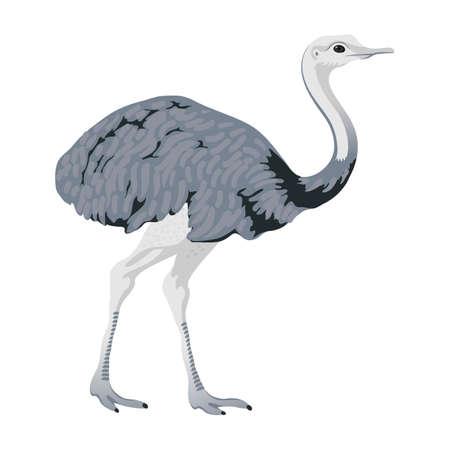 greater rhea ostrich bird detalised on white background, bird in modern cartoon style