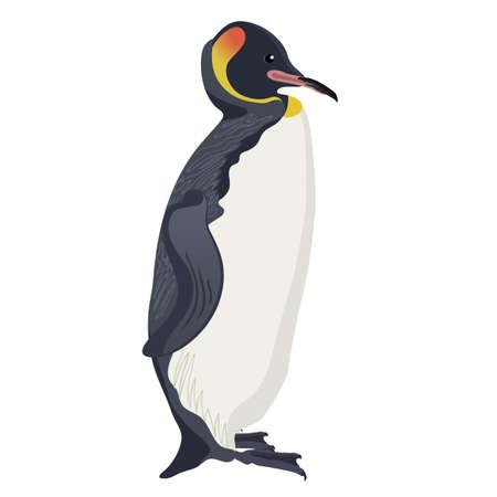 king penguin cartoon detalised bird isolated on white background