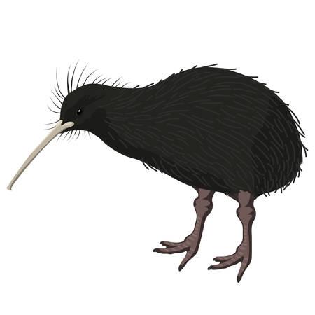 kiwi bird cartoon detalised bird isolated on white background