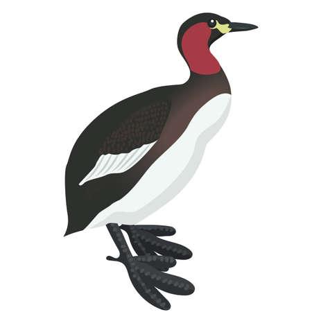 grebe: litle grebe cartoon detalised bird isolated on white background Illustration