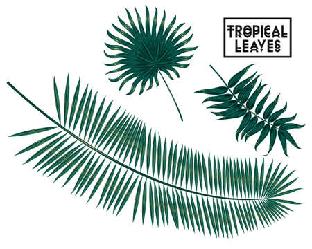 four leafs clover: Vector tropical palm leaves, jungle leaves set isolated on white background