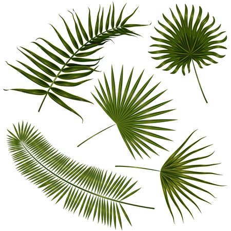 Vector tropical palm leaves, jungle leaves set isolated on white background