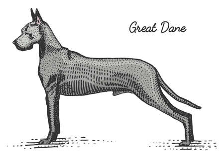 dog breed engraved, hand drawn vector illustration in woodcut scratchboard style, vintage species. Stock Illustratie