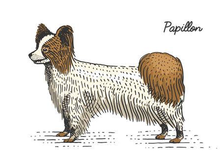 dog breeds engraved, hand drawn vector illustration in woodcut scratchboard style, vintage species. papillon