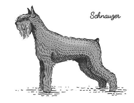 dog breeds engraved, hand drawn vector illustration in woodcut scratchboard style, vintage species. Illustration