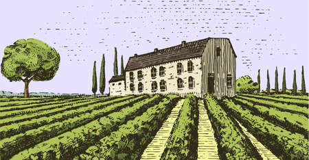 Vintage engraved, hand drawn vineyards landscape, tuskany fields, old looking scratchboard or tatooo style Illustration