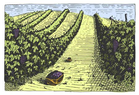 Vintage engraved, hand drawn vineyards landscape, tuskany fields, old looking scratchboard or tatooo style Иллюстрация