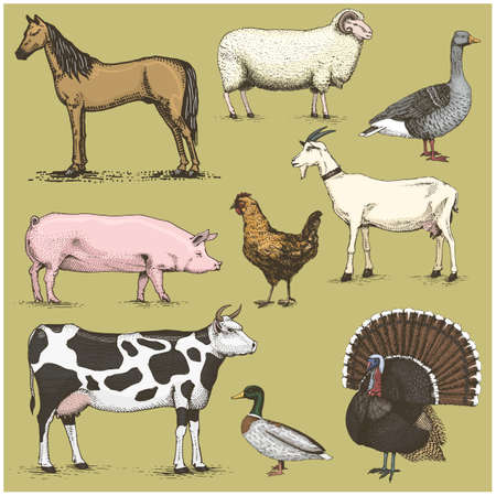 set of engraved vintage domestic, farm animals include horse and sheep, cow . chicken. goat . turkey. pig. duck with goose