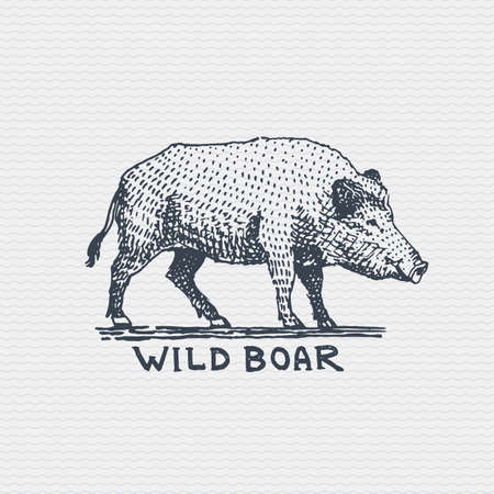 vintage old logo or badge, label engraved and old hand drawn style wild boar, pig