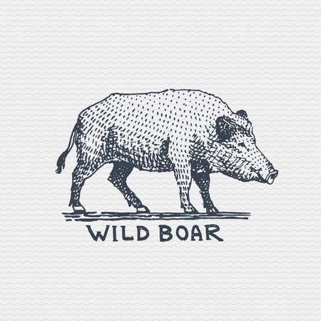 vintage oud logo of kenteken, gegraveerd etiket en oude hand getrokken stijl everzwijn, varken