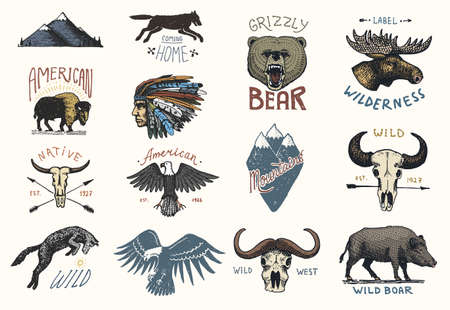 american vintage: set of engraved vintage, hand drawn, old, labels or badges for camping, hiking, hunting with boar, bear and wolf, red fox . skull and bald eagle, moose face, indian or native american. buffalo