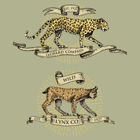 lince rojo: leopard and lynx logos, emblems or badges with wild animals and banners or ribbons in vintage, retro old style, hand drawn engraving. sketch Vectores