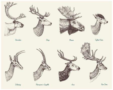 Großes Set von Horn, Geweihe Tiere Elch oder Elch mit Impala, Gazelle und größerem Kudu, Damhirsch Rentier und Hirsch, Damhirschkuh oder Reh, Achse und Dibatag Hand gezeichnet, graviert