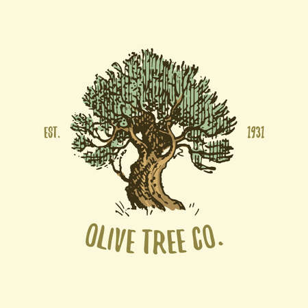 olive tree logo engraved or hand drawn, isolated old looking emblem for ecology, camping or food branding Ilustração
