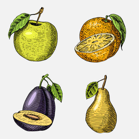 set of hand drawn, engraved fresh fruits, vegetarian food, plants, vintage looking green apple, orange and pear, plum. Ilustração