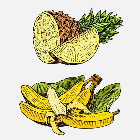 set of hand drawn, engraved fresh fruits, vegetarian food, plants, vintage looking bananas and pineapple.