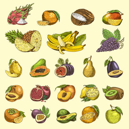set of hand drawn, engraved fresh fruits, vegetarian food, plants, vintage orange and apple, grape with coconut, gragonfruit, pear, peach, plum. Vectores