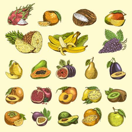 set of hand drawn, engraved fresh fruits, vegetarian food, plants, vintage orange and apple, grape with coconut, gragonfruit, pear, peach, plum. Illustration
