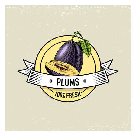 prune: Plum Vintage, hand drawn fresh fruits background, summer plants, vegetarian and organic citrus and other, engraved. Illustration