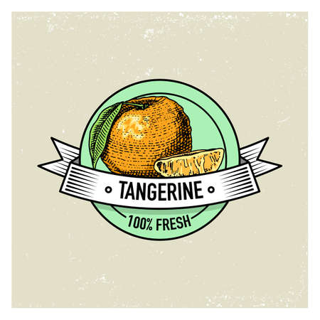 Tangerine Vintage, hand drawn fresh fruits background, summer plants, vegetarian and organic citrus and other, engraved.