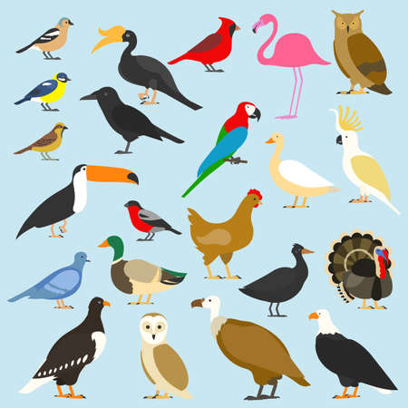big set of tropical, domestic and other birds, cardinal, flamingo, owls, eagles, bald, sea, parrot, goose. raven. sparrow. chicken. turkey. cockatoo. pigeon. toco toucan. hornbill. griffon. duck. Illustration