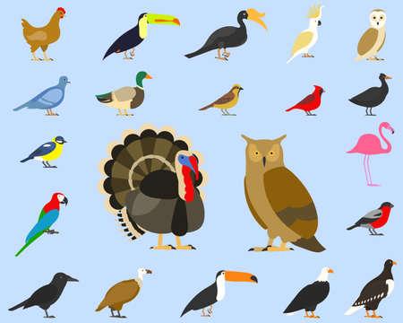 big set of tropical, domestic and other birds, cardinal, flamingo, owls, eagles, bald, sea, parrot, goose. raven. sparrow. chicken. turkey. cockatoo. pigeon. toco toucan. hornbill. griffon. duck. Illustration