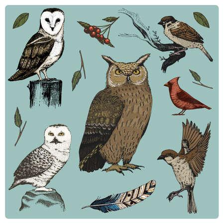 손으로 그린 벡터 현실적인 조류, 스케치 그래픽 스타일, 국내의 설정. 칠면조와 오리. 거위 및 레드 추기경. 비둘기와 참새. 까마귀와 깃털. 오타 알바, 일러스트