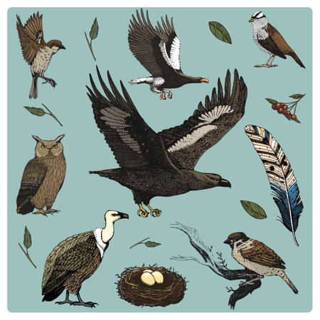 griffon: hand drawn vector realistic bird, sketch graphic style, set of domestic. griffon vultures and owl. dove and sparrow. raven and feather. Nest with eggs
