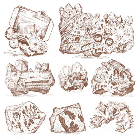 Fossilized plants, stones, minerals and prehistoric animals, engraved hand drawn in old sketch and vintage style