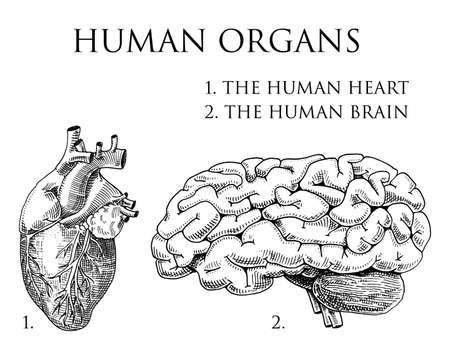 Human biology, organs anatomy illustration. engraved hand drawn in old sketch and vintage style. body detailed brain or pericranium and heart or soul. Çizim