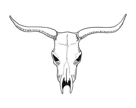 生物学や解剖学のイラスト。刻まれた手の古いスケッチとビンテージ スタイルで描画されます。頭蓋骨や骨格のシルエット。ブルや角を持つ動物。