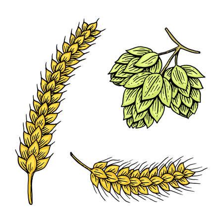 Barley and wheat, malt and hops. Beer of Oktoberfest.