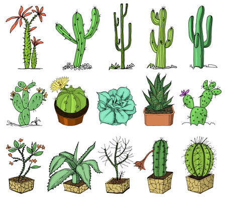 different cactus illustration royalty free cliparts vectors and