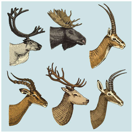 Set of Horned Animals