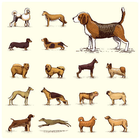 Set of different dog breeds icon. Illustration