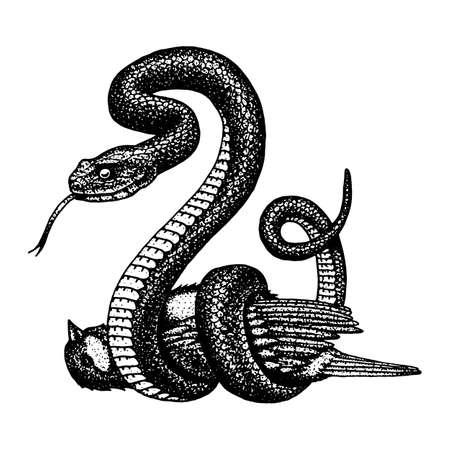 Ilustração desenhada a mão da cobra Víbora. Ilustración de vector
