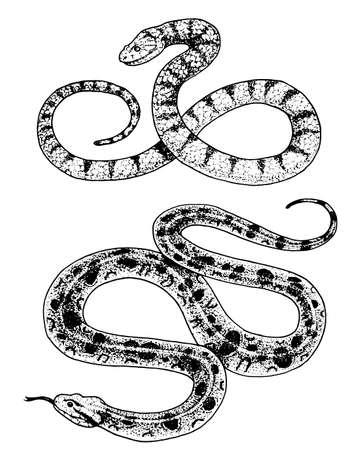 Adder slang hand getekend in oude schets, vintage stijl