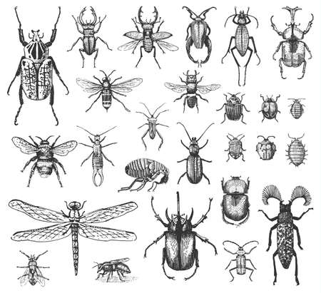 big set of insects bugs beetles and bees many species in vintage old hand drawn style engraved illustration woodcut. Illusztráció
