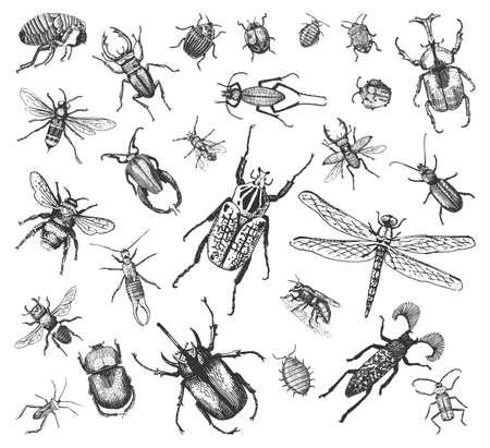 grande conjunto de insetos insetos besouros e abelhas muitas espécies em estilo antigo desenhado a mão gravado em madeira gravada.