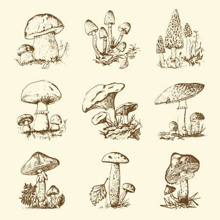 Mushroom set hand drawn engraved. vintage organic vegetarian food. champignon, chanterelles, honey fungus, fly agaric, amanita, common stinkhorn, penny bun, red-capped scaber stalk for menu, packaging 向量圖像