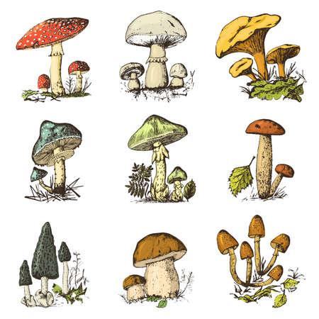 Mushroom set hand drawn engraved. vintage organic vegetarian food. champignon, chanterelles, honey fungus, fly agaric, amanita, common stinkhorn, penny bun, red-capped scaber stalk for menu, packaging Ilustração Vetorial