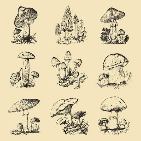 Mushroom set hand drawn engraved. vintage organic vegetarian food. champignon, chanterelles, honey fungus, fly agaric, amanita, common stinkhorn, penny bun, red-capped scaber stalk for menu, packaging Stock Photo