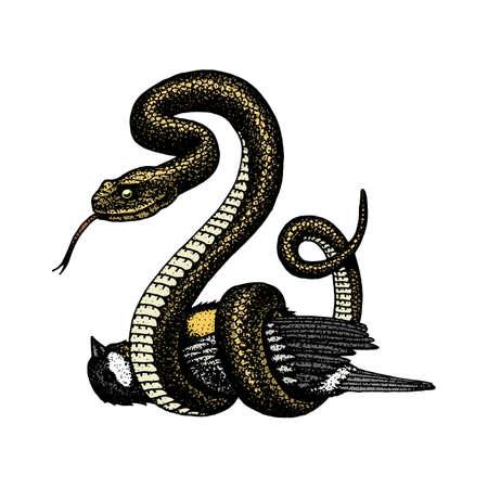 Serpiente víbora serpiente cobra y pitón, anaconda o víbora, real. dibujado a mano grabado en viejo boceto, estilo vintage para etiqueta y tatuaje. ofidiano y asp.