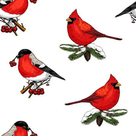 acebo de patrones sin fisuras y Camachuelo, cardenal rojo, aves. Feliz Navidad o Navidad, año nuevo. decoración de vacaciones de invierno. mano grabada en boceto antiguo y estilo vintage. Ilustración de vector