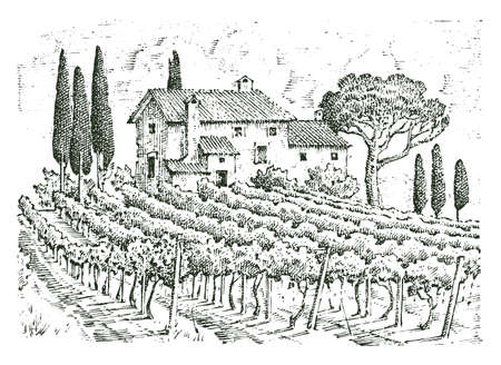 rustic vineyard. rural landscape with houses. solar tuscany background. fields and cypress trees. harvesting and haystacks. engraved hand drawn in old sketch and vintage style for label