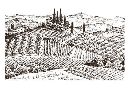 rustic vineyard. rural landscape with houses. solar tuscany background. fields and cypress trees. harvesting and haystacks. engraved hand drawn in old sketch and vintage style for label. Ilustrace
