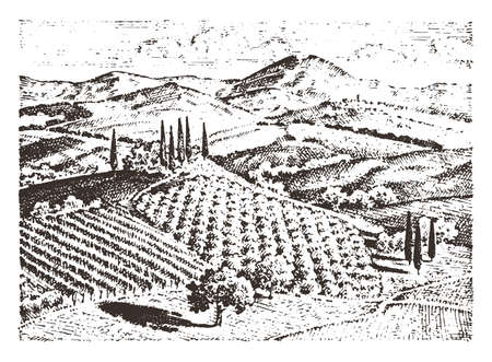 rustic vineyard. rural landscape with houses. solar tuscany background. fields and cypress trees. harvesting and haystacks. engraved hand drawn in old sketch and vintage style for label. 矢量图像