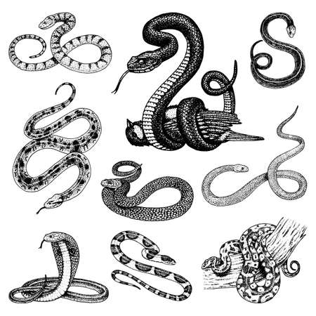 Set di illustrazione di serpente.